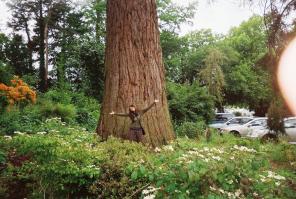 gian tree