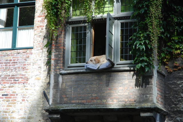 Bruges-Dog-in-Window